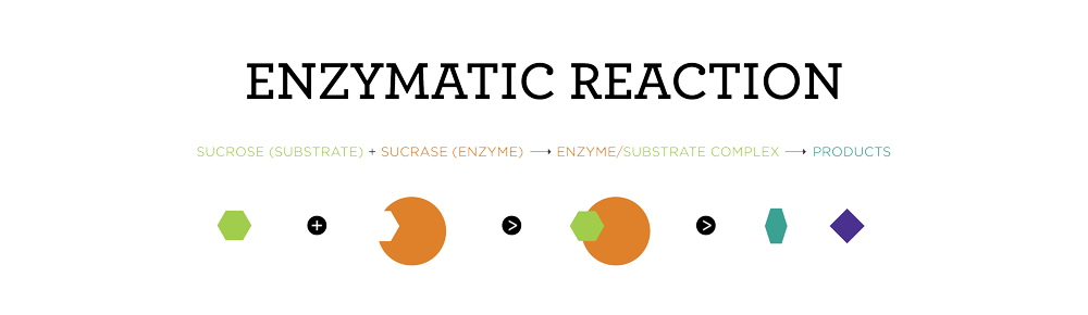 ENZYMATIC_REACTION-01